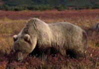 Выживаем на природе: как вести себя при встрече с медведем